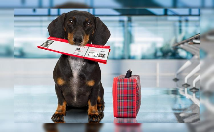 Путешествия с животными: все за и против