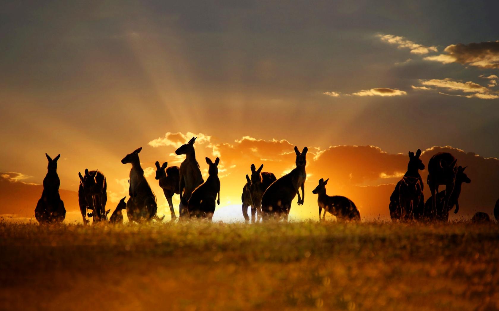 Охота: Чисто австралийские убийства