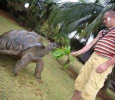 приручение черепахи