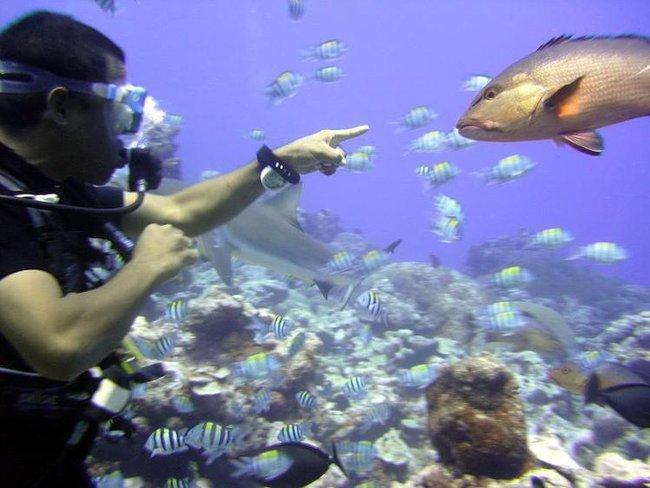 Морган и рыба