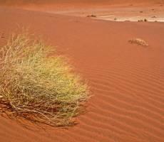Дюны в пустыне Намиб, район Соссуфлей