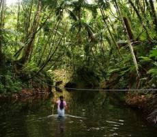 Вброд через джунглевую реку