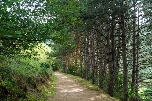 Лес. Верхний уровень