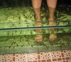 Пилинг ног рыбами