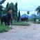 16 Сайок.Слоновий парк
