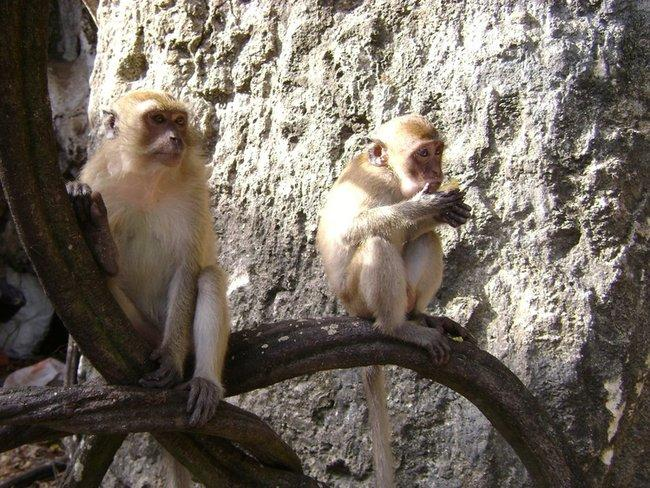 обзьяны
