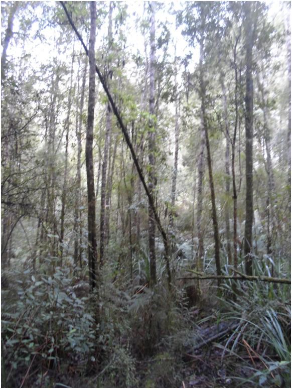 Дождевые леса Виктории