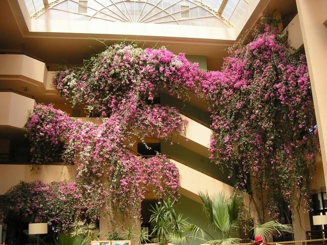 Отель Джустиана Парк в Алании