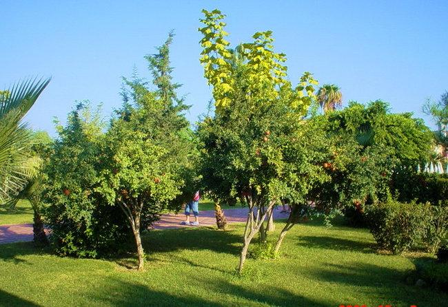 Зелень Барбароса