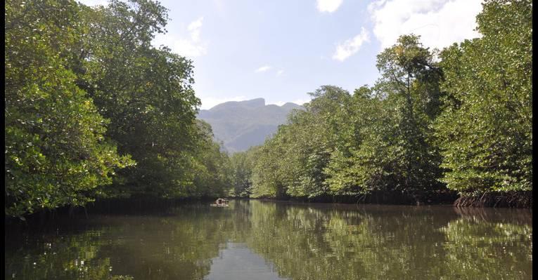 мангровый лес и речка