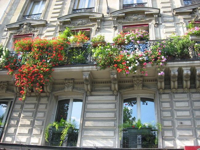 Цветы Парижа
