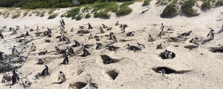 Мы - народ пингвинии