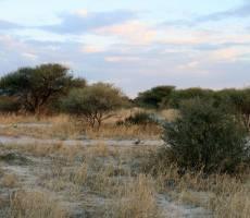 Калахарский пейзаж