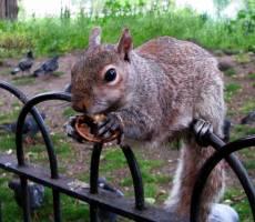 а орешки не простыя