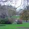 Цветение миндаля в Грин парке