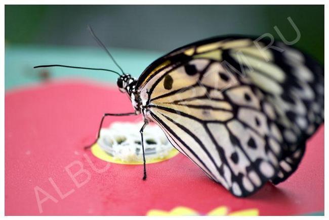 Зоопарк. Дом бабочек