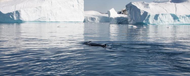 Дания: Гренландия
