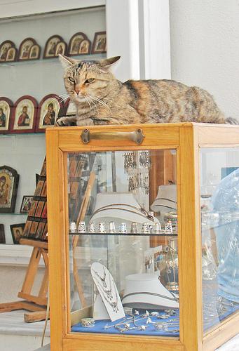 сторожевая кошка