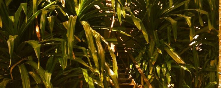 Гигантская трава