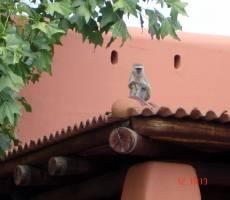 мартышки на территории отеля