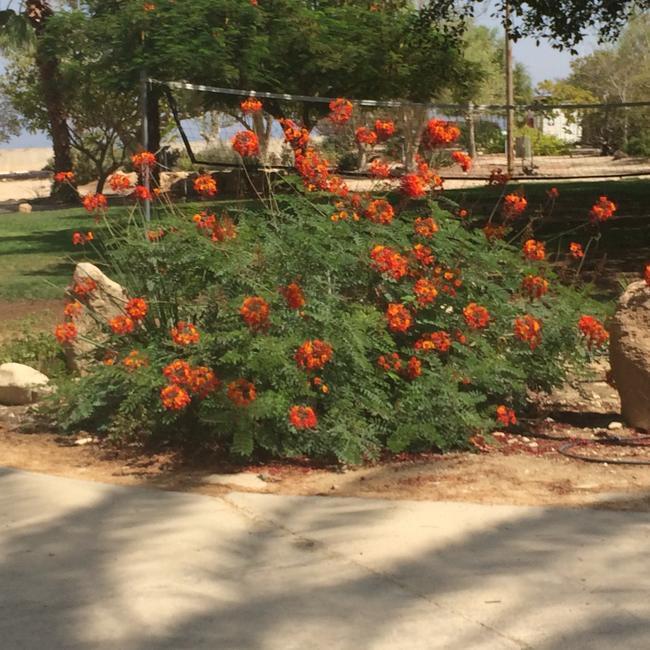 Ботанический сад в СПА Эйн-Геди
