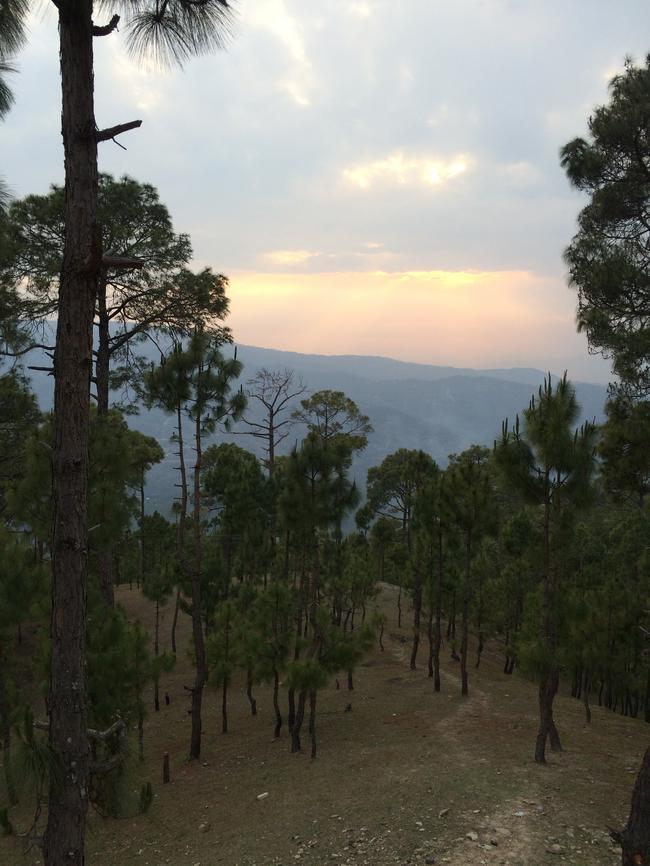 Вечер в  лесу Гималаев