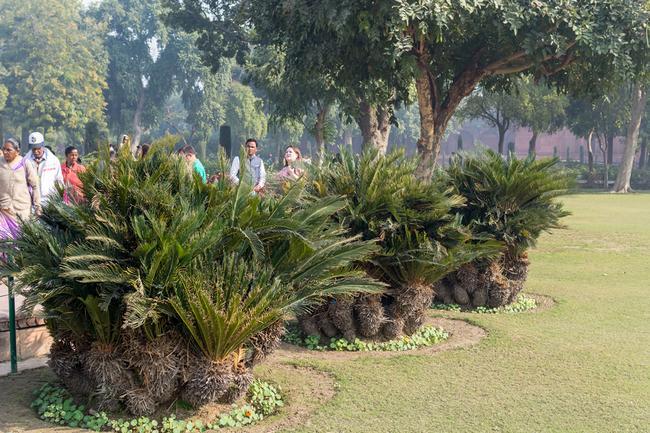 Растительность в парке Тадж-Махала.