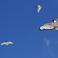 Тенерифские птички