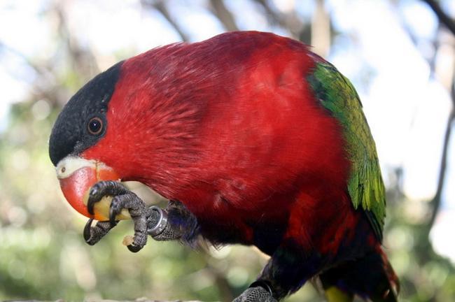 Попугай в Loro Parque