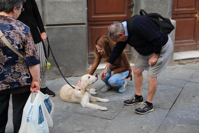 итальянские псы