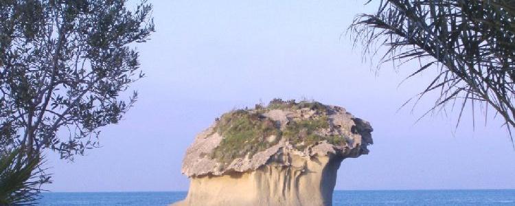 Фунго = остров–гриб