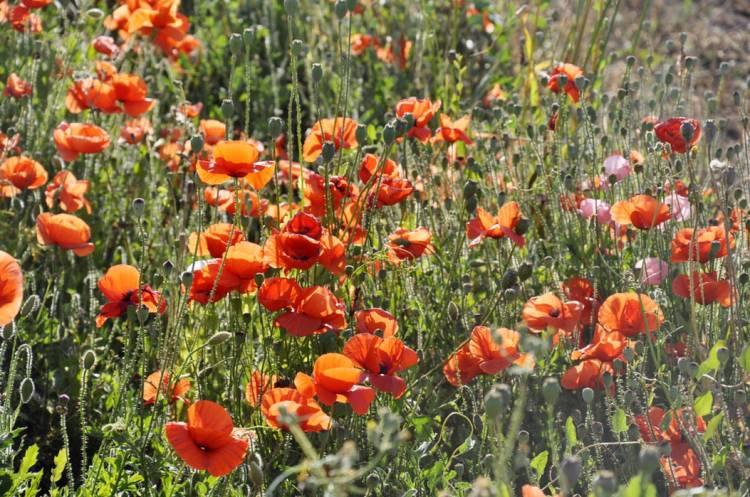 Весна на Мальте