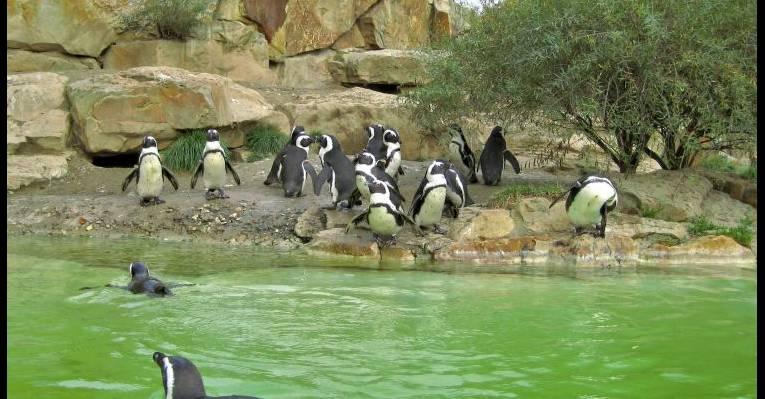 Поляны зоопарка