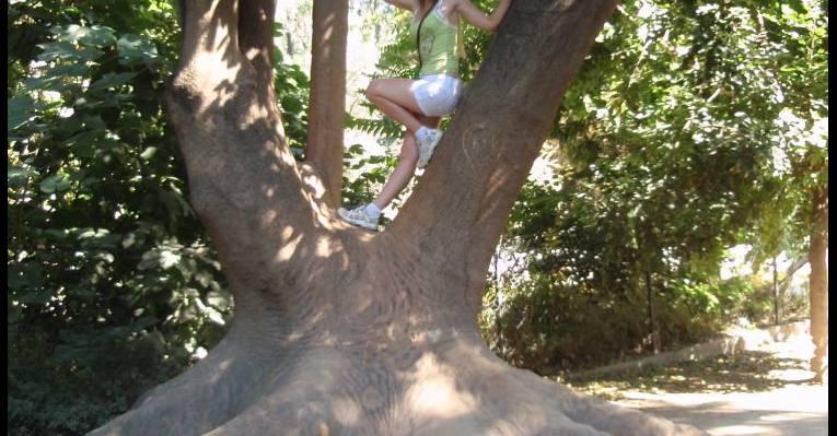 Очень старое дерево