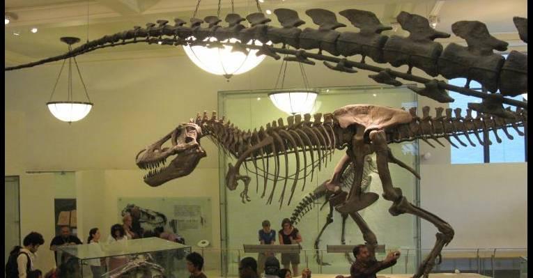 Зал динозавров
