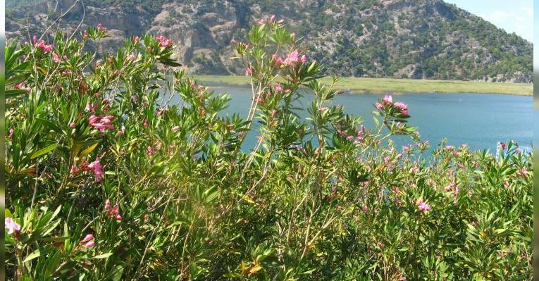 Вид на реку Дальян с пляжа Изтузу