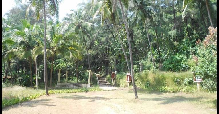 Вход в джунгли
