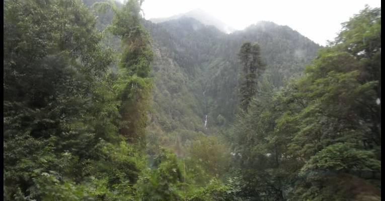 мюссерские джунгли