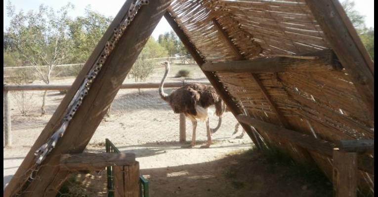 Зоопарк-парк Фригия