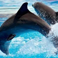 Дельфинарий Дольфинелла