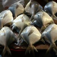 Рыбный рынок Сиолима