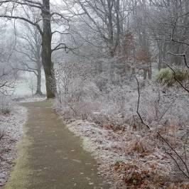 Slottsskogen