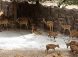 Zoo and Botanical Gardens