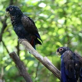 Исторический парк Гуайяквиль