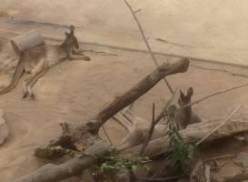 Zoológico Nacional de Chile