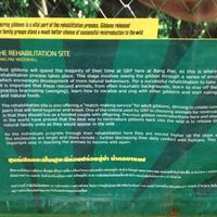 Gibbon Rehabilitation Project