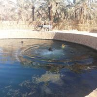 Cleopatra's Pool - Spring of Juba