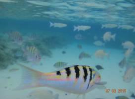 Bluewater Island Resort Aquarium