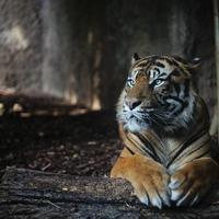 Зоопарк в Фуэнхироле