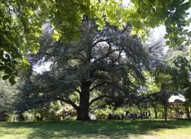 Wombat Hill Botanical Gardens